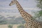 Vuelo-globo-tanzania(12)